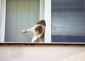 гибель в окне